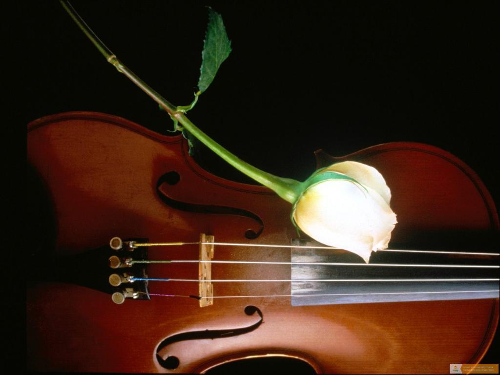 Музыкальные картинки анимашки цветы 1