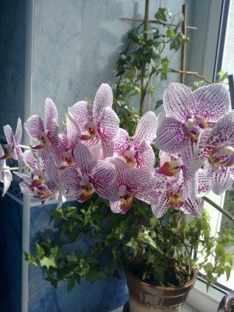 У віршах мазур наталя орхідея вірш