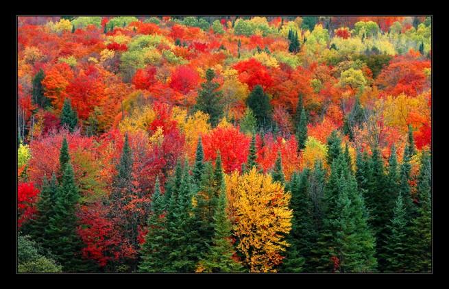 :: яна бім: вересневий ліс… - вірш