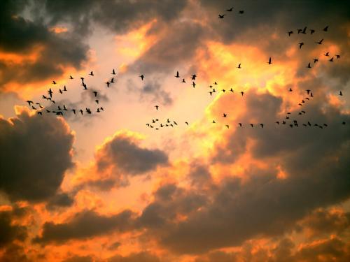 Если вы увидели в сновидении домашнюю птицу - то вы скоро разбогатеете.