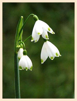 У віршах sukhovilova сумні квіти вірш