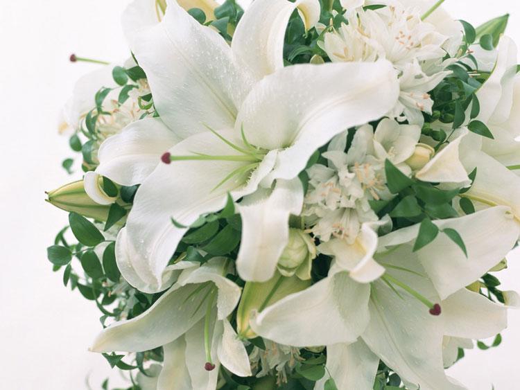 Білі лілеї ніжності квіти білі лілеї