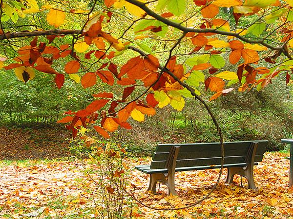 Что делать с листвой осенью в саду