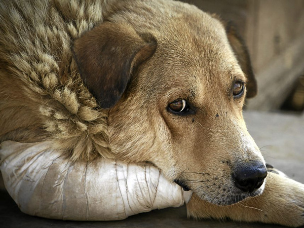 """Результат пошуку зображень за запитом """"бездомний собака"""""""