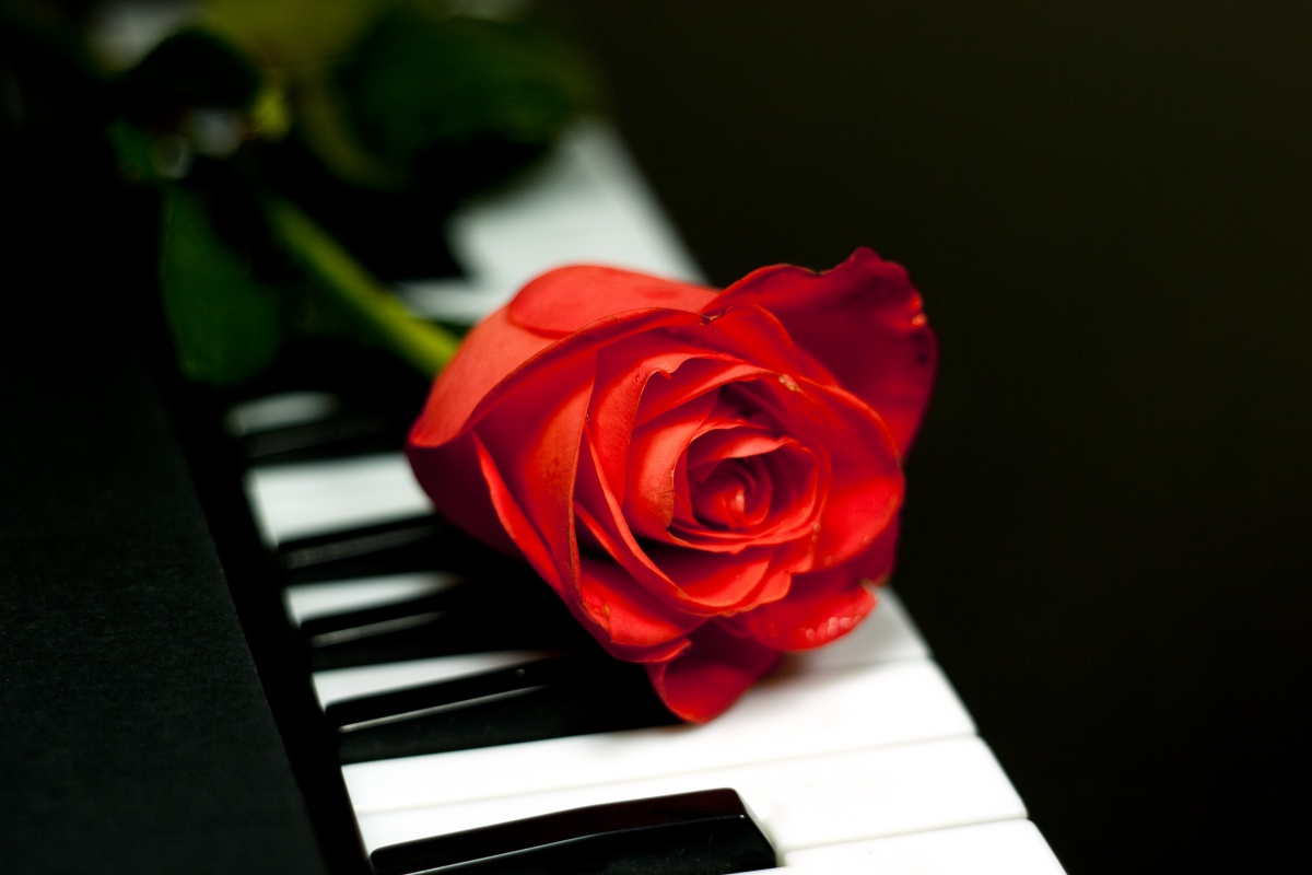 Картинки рояль и цветы 8