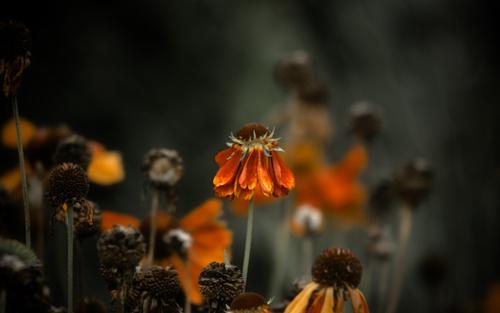 Картинки засохшие цветы 1