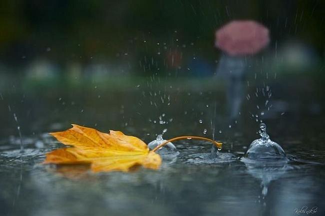 """Результат пошуку зображень за запитом """"осінній дощ"""""""