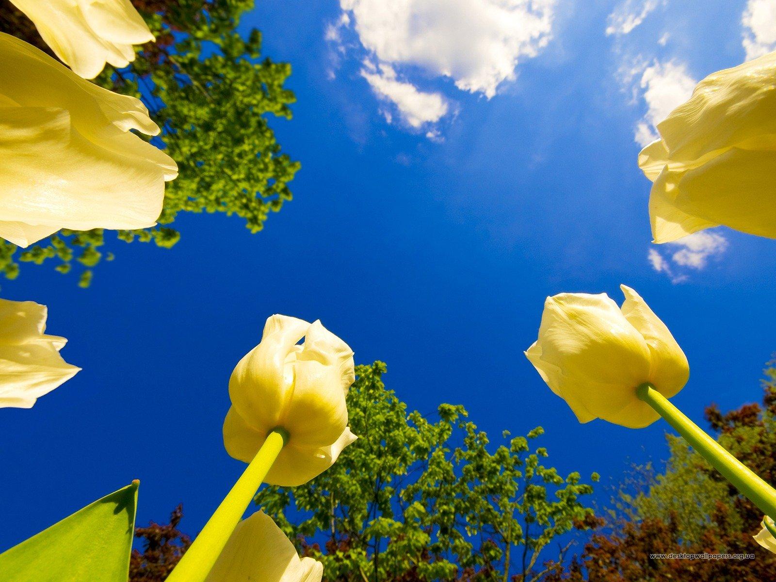 Леся Геник :: Є люди - квіти…