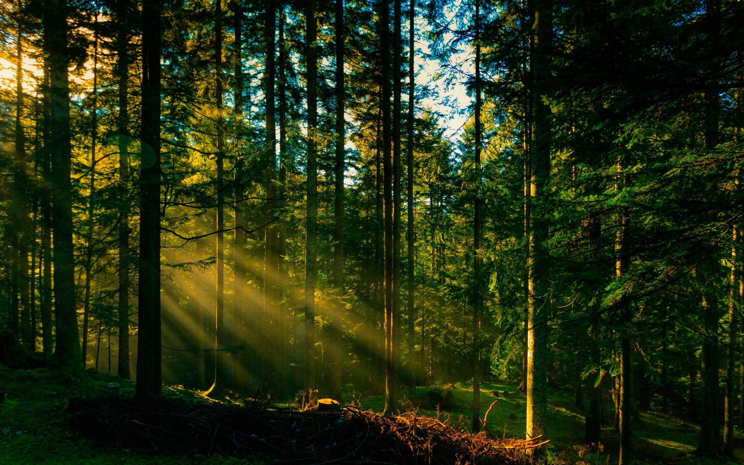 На Закарпатті оновлять ліси
