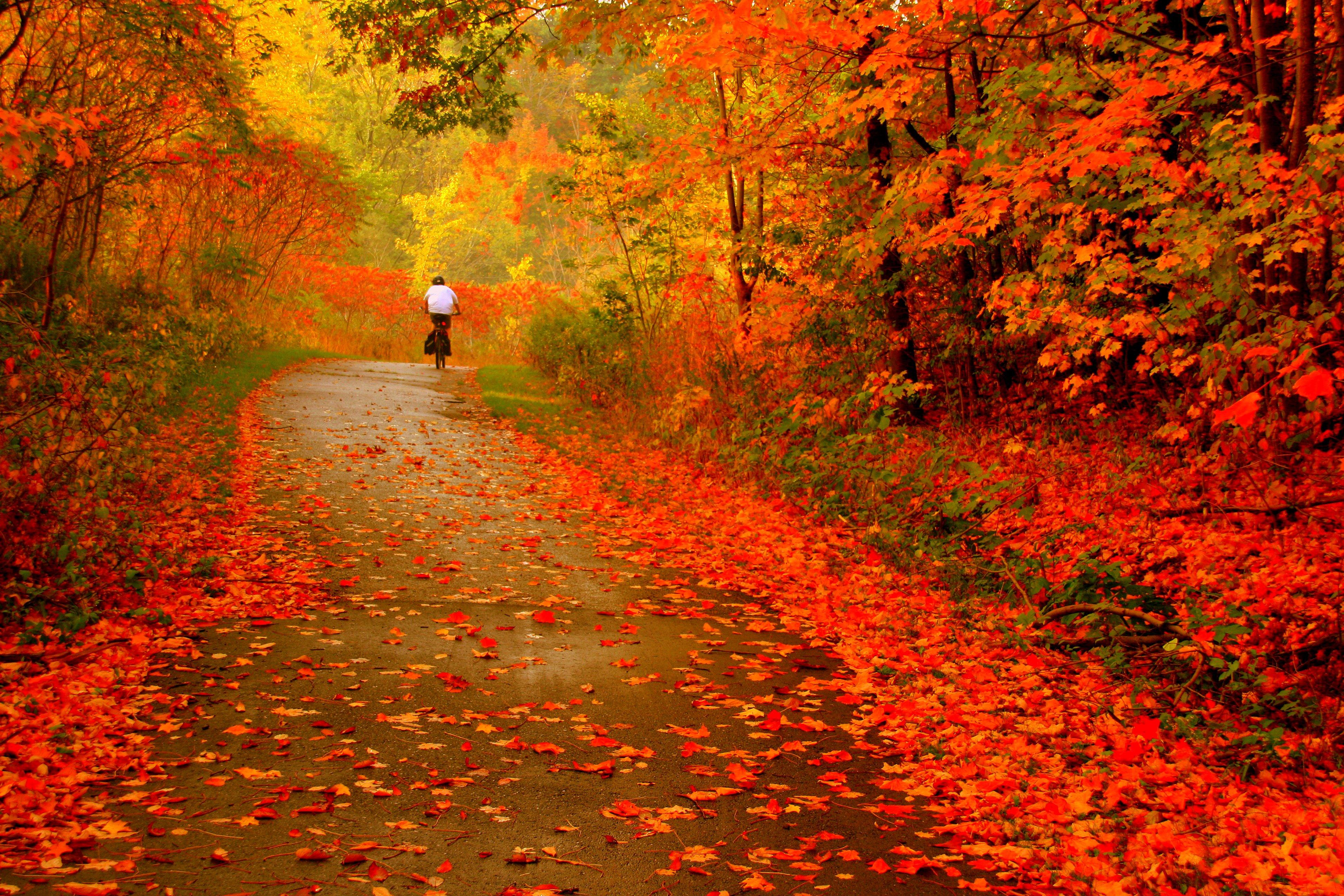 Фото золотой дощ 22 фотография