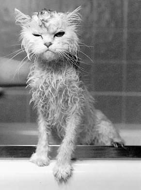 Фото облезлых котов