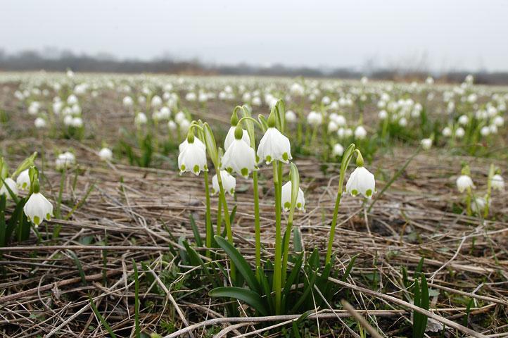 Леся Геник :: А все одно весна!