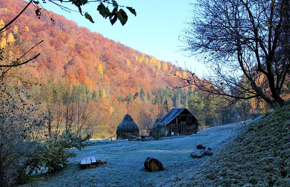 Леся Геник :: ***Барвистий ліс і паморозь ранкова…