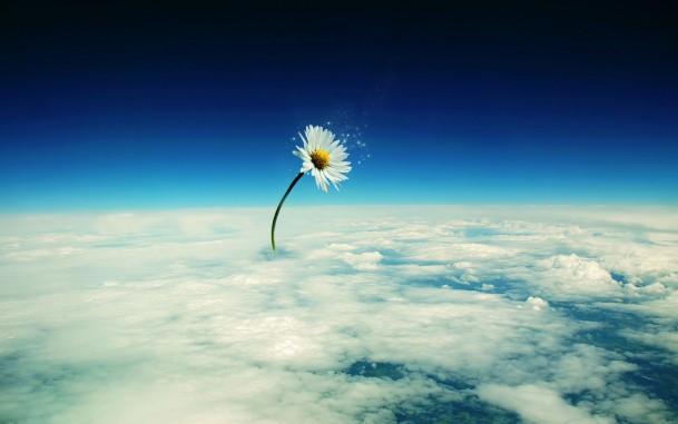 Леся Геник :: ***Коли ти несподівано стаєш квіткою