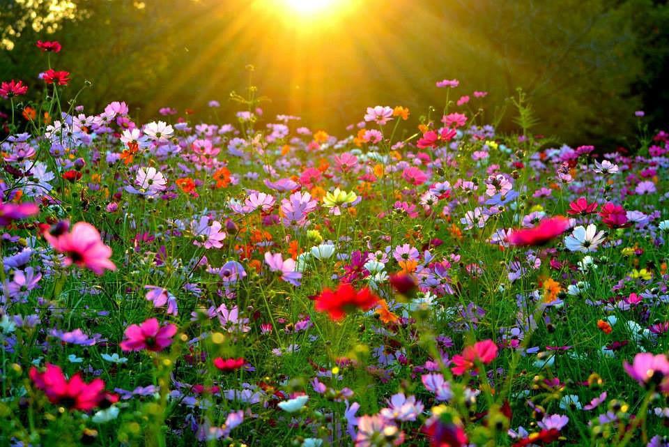 "Результат пошуку зображень за запитом ""квіти"""