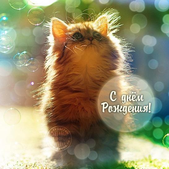 Поздравления с днем рождения с котиком