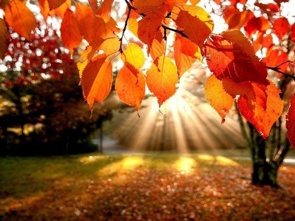 Леся Геник :: *** Нехай довкола невблаганна осінь…