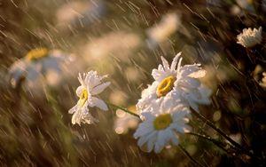 Леся Геник :: Серпневий дощ